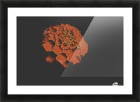 Carnation Bliss Picture Frame print