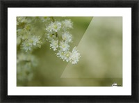 Oceanspray Picture Frame print