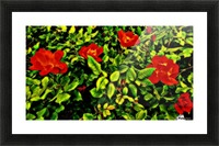 roselooking Picture Frame print
