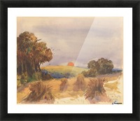 A cornfield at sunset Picture Frame print