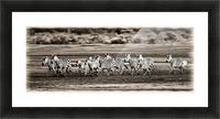 Running Zebras, Serengeti National Park, Tanzania, Africa Picture Frame print