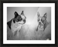 Boston Terriers Picture Frame print