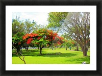 St Kitts Independence Square 6 Picture Frame print