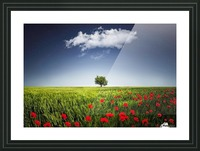 Lone tree a poppies field Picture Frame print