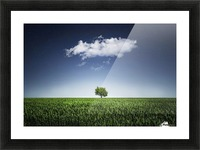 A tree covered with clouds Picture Frame print