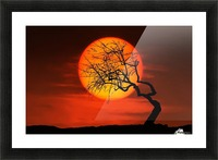 Bird on Sun Picture Frame print