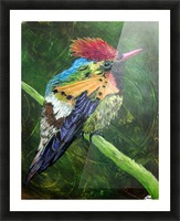 Tufted Coquette Hummingbird Picture Frame print