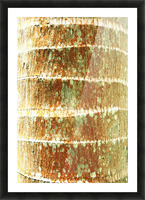 Hawaii, Oahu, Close-Up Of Coconut Palm Tree Bark Texture. Picture Frame print