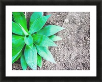 green leaf plant with sand background Picture Frame print