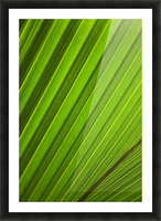 Graphic Detail Of Coconut Palm Leaf. Picture Frame print
