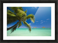 USA, Hawaii, Oahu, Mokulua island in background; Lanikai, Palm tree over Pacific Ocean Picture Frame print