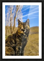 Adult Wild Cat Sitting and Watching Picture Frame print