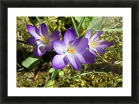 DSC06574 Picture Frame print