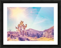 cactus at the desert in summer with strong sunlight Picture Frame print