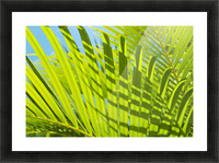 Close-Up Detail Of Light Green Palm Leaves With Shadow Pattern Against Blue Sky Picture Frame print