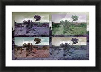 Utah Tree Collage Picture Frame print