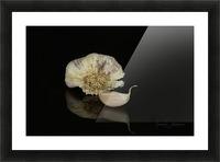 Garlic Picture Frame print