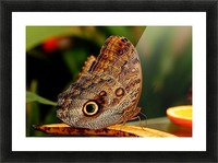 Morph Picture Frame print