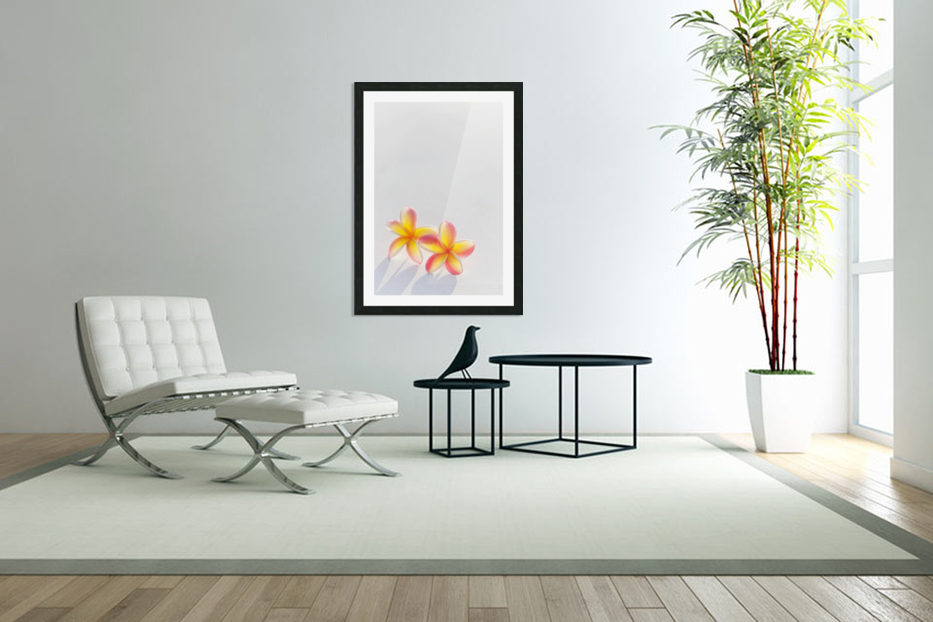 A pair of beautiful yellow and pink Plumeria flowers together (Apocynaceae) on a white background; Honolulu, Oahu, Hawaii, United States of America in Custom Picture Frame