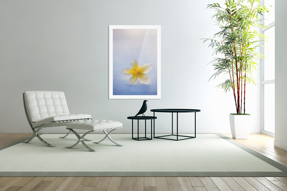 Close-up of a single beautiful yellow Plumeria flower (Apocynaceae) in soft focus; Honolulu, Oahu, Hawaii, United States of America in Custom Picture Frame
