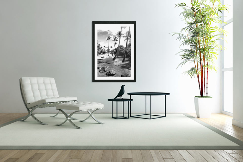 palm tree with cloudy sky in black and white in Custom Picture Frame