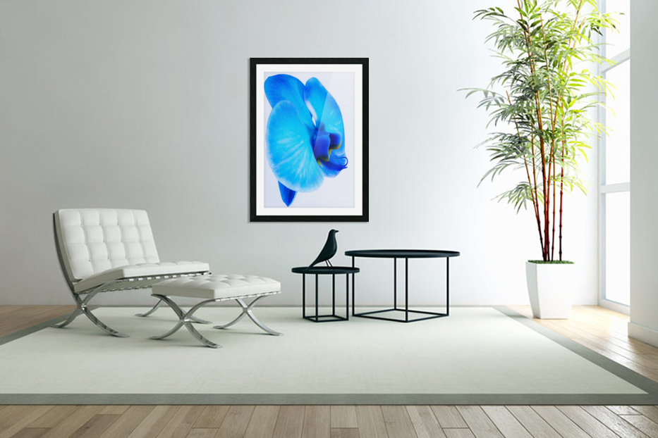 ORCHIDÉE BLEUE in Custom Picture Frame