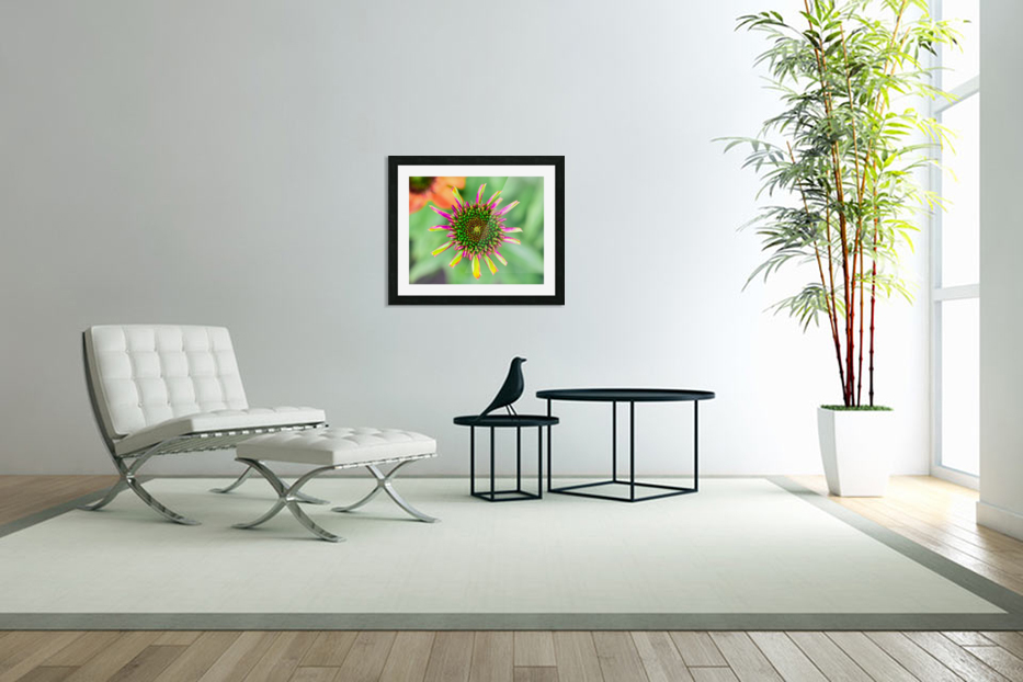 Echinacea in Custom Picture Frame