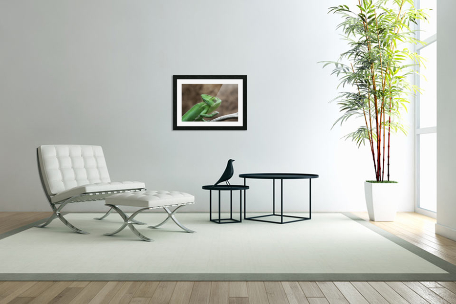 Funny pose of a chameleon in Custom Picture Frame