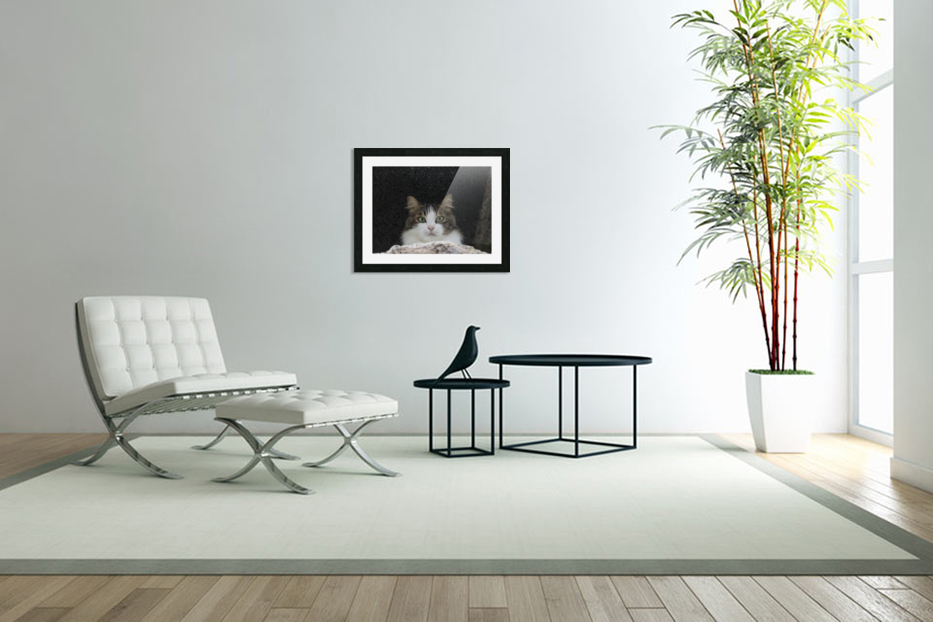 Cat portrait in Custom Picture Frame