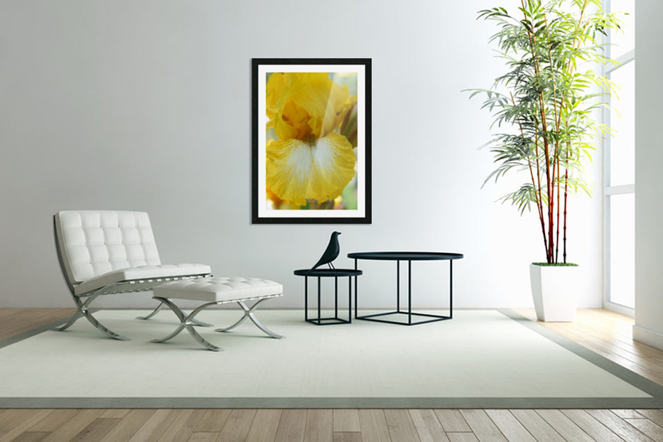 Yellow Iris Photograph in Custom Picture Frame