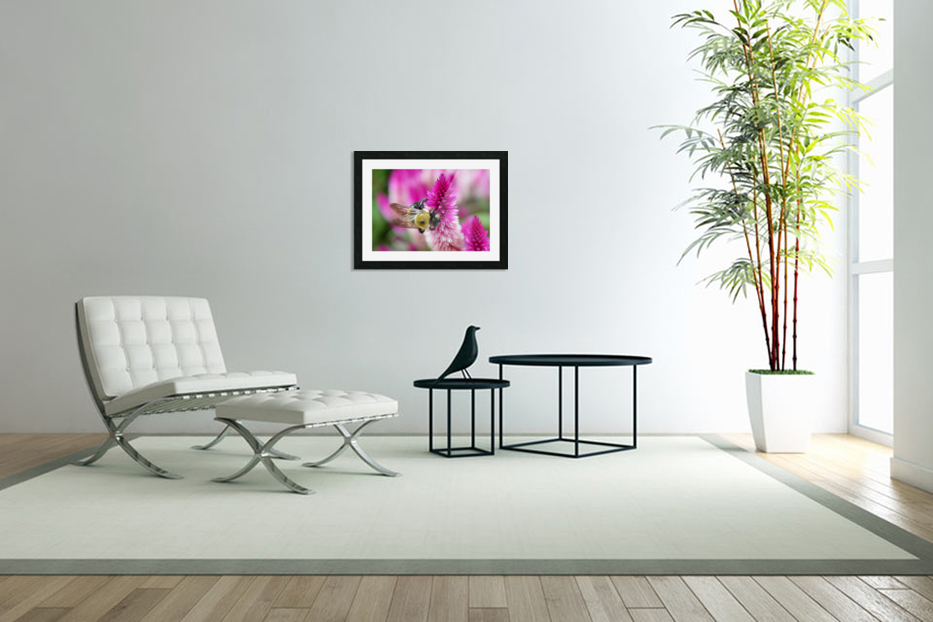 Bee On Pink Flower Photograph in Custom Picture Frame