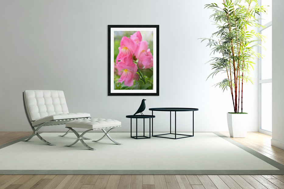 Pink Snapdragon Photograph  in Custom Picture Frame