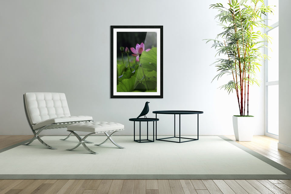 Lotus in Custom Picture Frame