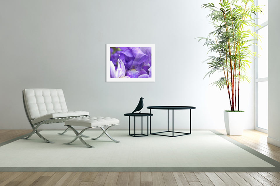 Blue Iris Photograph in Custom Picture Frame
