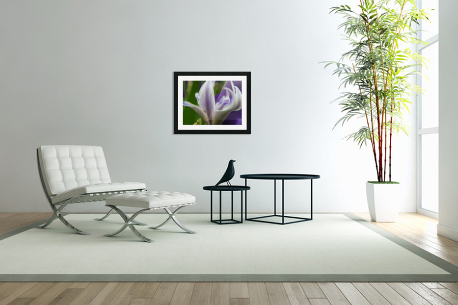 Purple Flower Photography in Custom Picture Frame