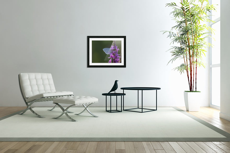 Butterfly on a flower in Custom Picture Frame