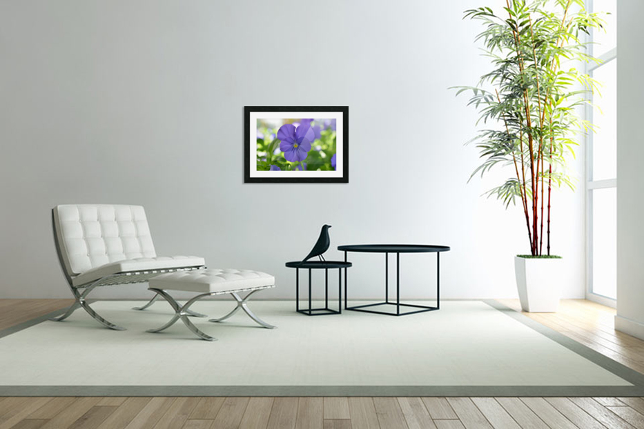 Blue Pansy Photograph in Custom Picture Frame