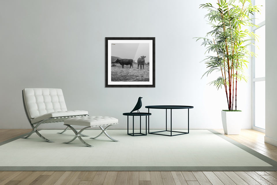 Cows in the mist in Custom Picture Frame