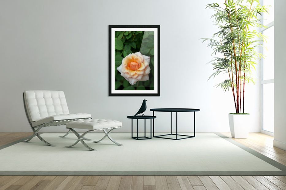 Pretty as a Rose in Custom Picture Frame