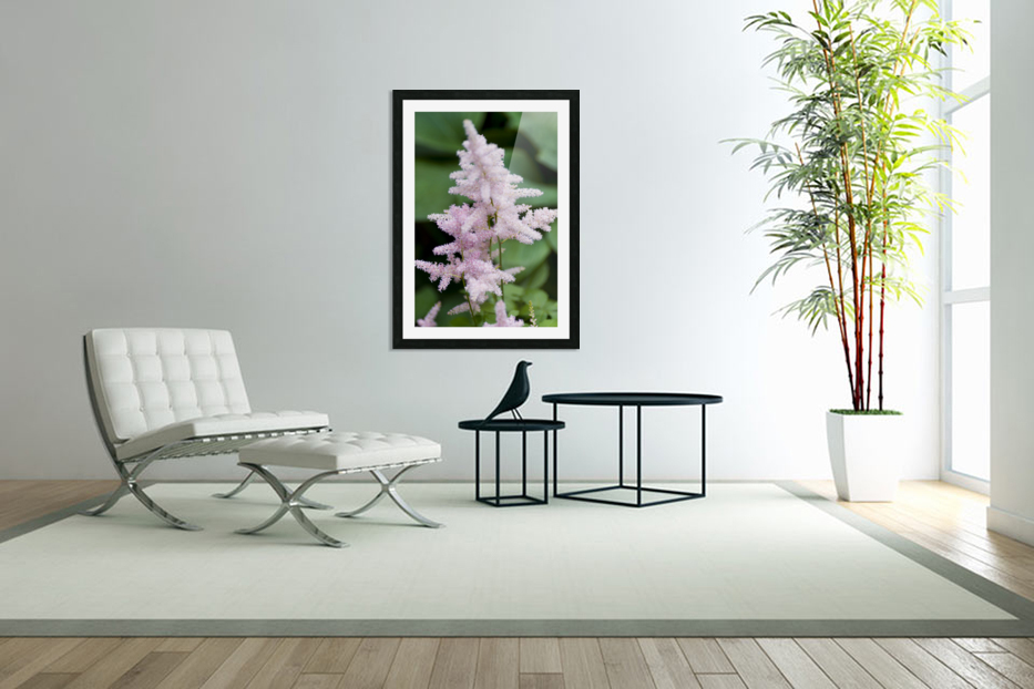 Pink Astilbe 2 in Custom Picture Frame