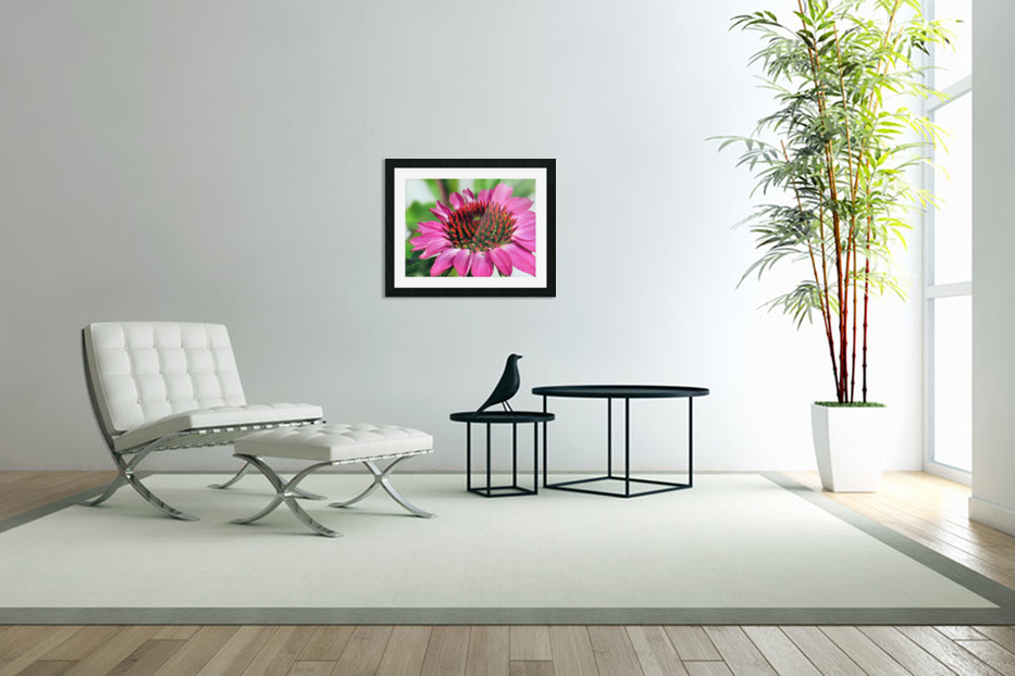 Pink coneflower  in Custom Picture Frame