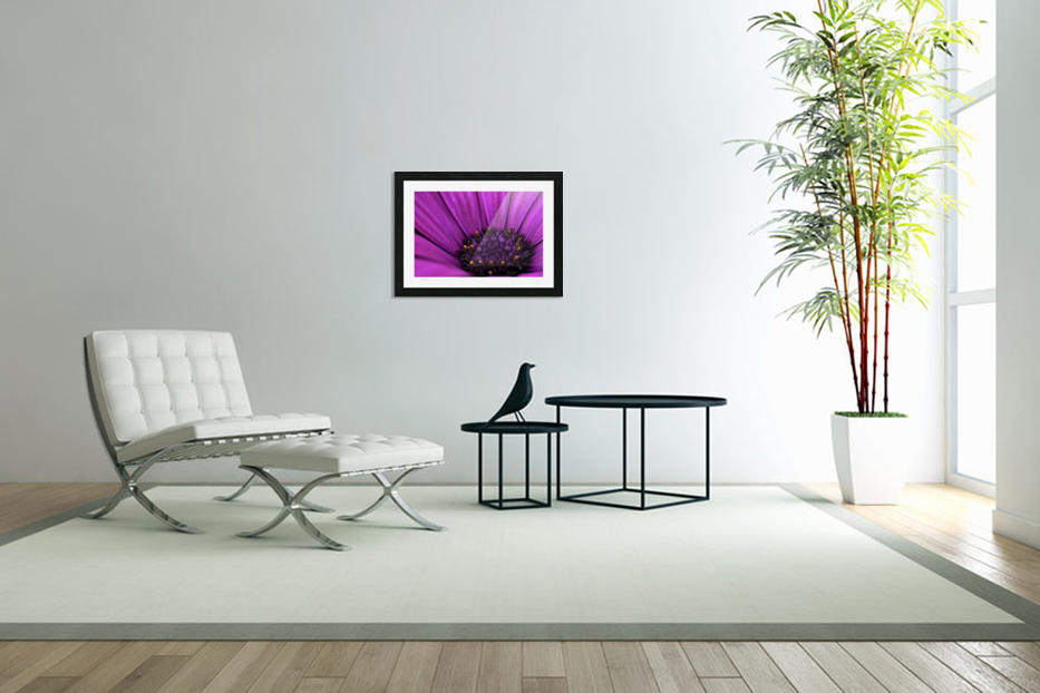 Purple Osteospermum Daisy Photograph Macro in Custom Picture Frame