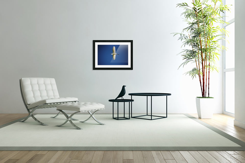 Egret Sailing Above in Custom Picture Frame