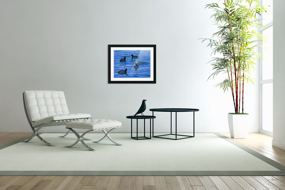Coots Feeding in Custom Picture Frame