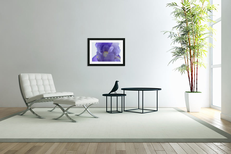 Purple Iris Photograph in Custom Picture Frame