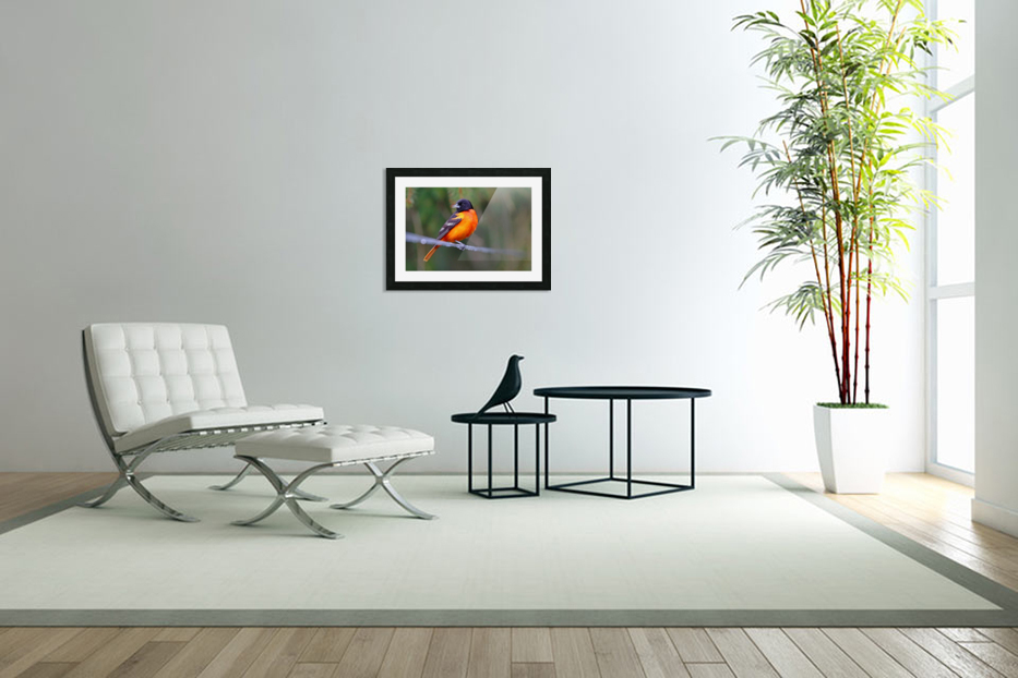 Baltimore Oriole On The Line in Custom Picture Frame