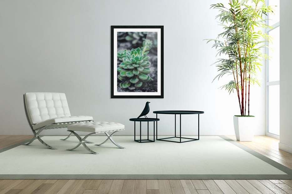 Sweetyplant in Custom Picture Frame