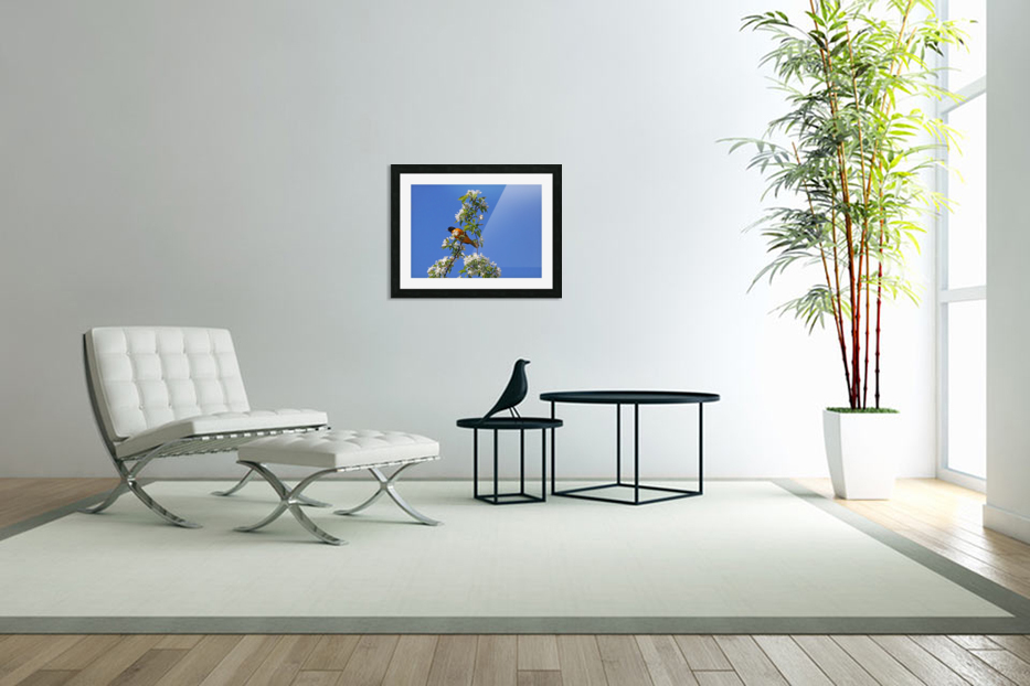 Oriole And White Blossoms in Custom Picture Frame