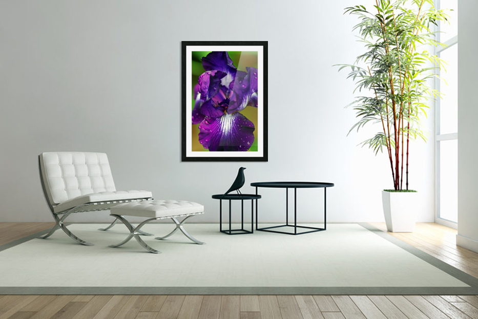 Purple With White Splash Iris in Custom Picture Frame