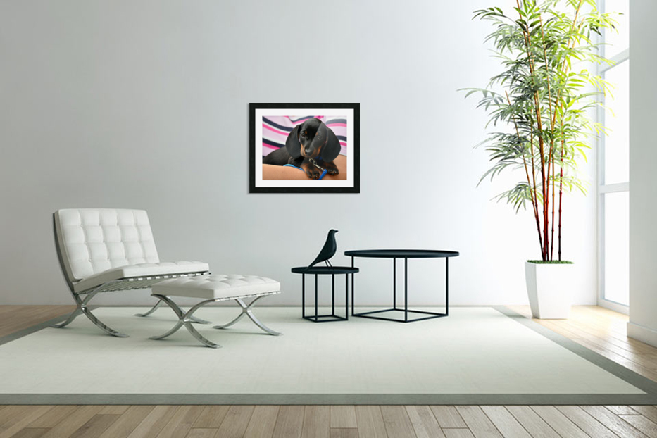 dachshund puppy young animal in Custom Picture Frame